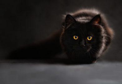 кошка глаза черный